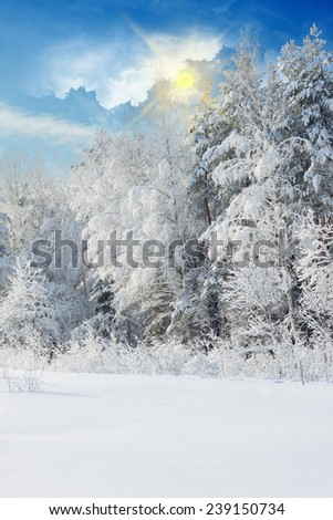 Winter landscape with snowy trees after snowstorm - stock photo