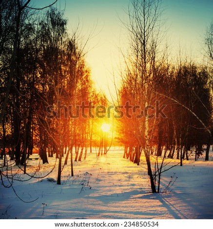 Winter landscape with sunset and forest