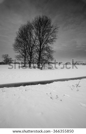 Winter landscape with the snowy field and frozen plants at the sunset