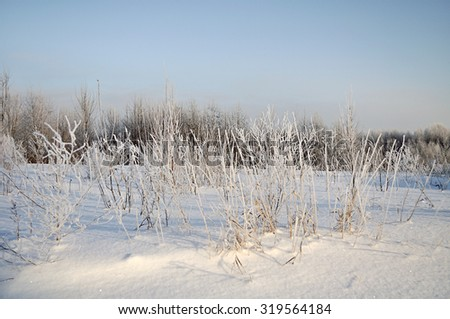 Winter landscape with the snowy field and frozen plants at the sunset - focus at the plants - stock photo