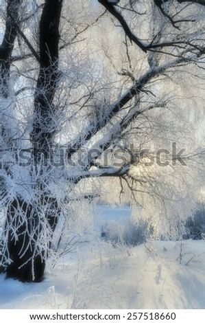 Winter landscape with thin fog and sunlight (soft focus processing) - stock photo