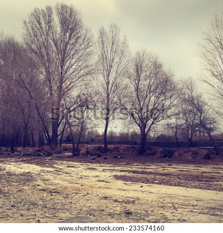 Winter landscape with trees - stock photo