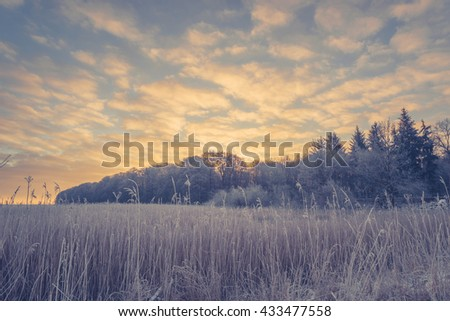 Winter landscape with trees on a field and a sunrise - stock photo