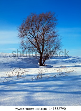 Winter lanscape with single tree in sunny day - stock photo