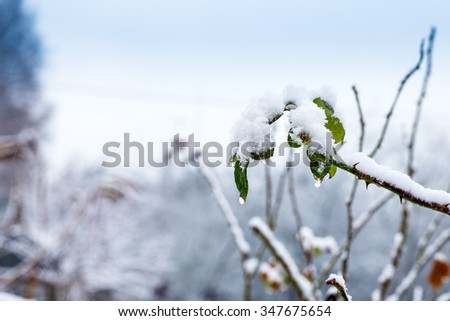 winter, leaves, icicle - stock photo