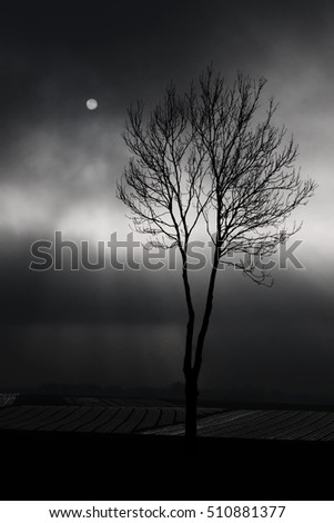 winter lonely tree standing over the empty fields on the background of a dark, rainy skies