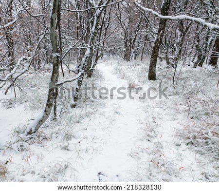 Winter misty landscape with forest. - stock photo
