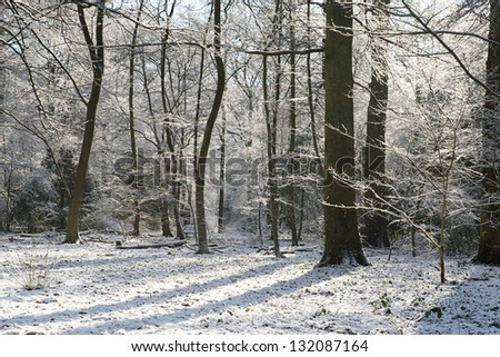 Winter morning in a park where trees are covered with snow