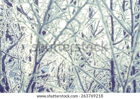 Winter morning tree branches with ice crystals, vintage photo effect. - stock photo