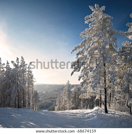 Winter mountain landscape. Snow-covered spruce and blue sunny skies.