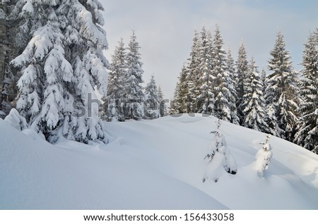 Winter mountain landscape with fir forest covered with snow. Carpathian mountains, Ukraine