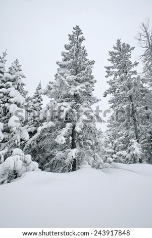 Winter mountain landscape with fir forest covered with snow. Mountain of Lake Baikal. Baykalsk, Irkutsk region, Siberia, Russia.