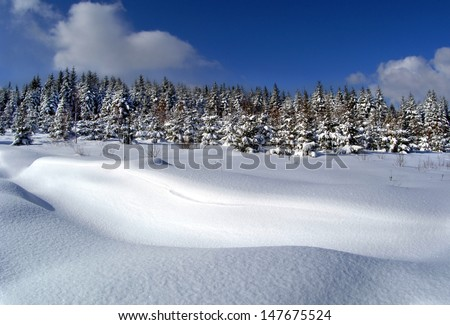 winter mountain scenery. overcast sky. snowy forest - stock photo