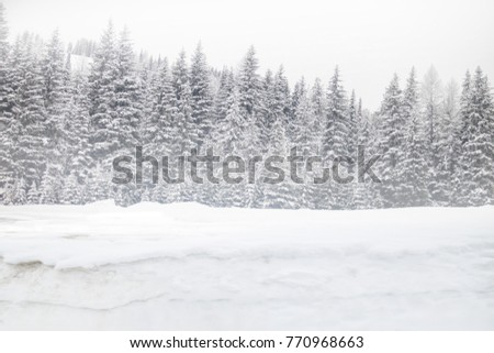 Winter mountain trees on winter   background landscape,trees with snow in a forest