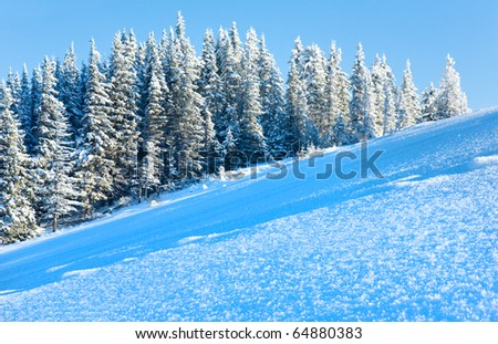 Winter mountain view with snow surface on mountainside in front and fir forest behind. - stock photo