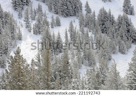 Winter mountainside