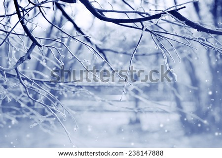Winter nature background - stock photo