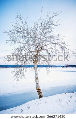 Winter nature landscape. - stock photo