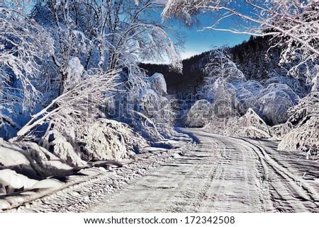winter night road - stock photo