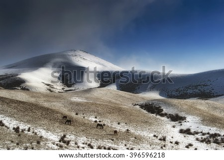 Winter on the hills - stock photo