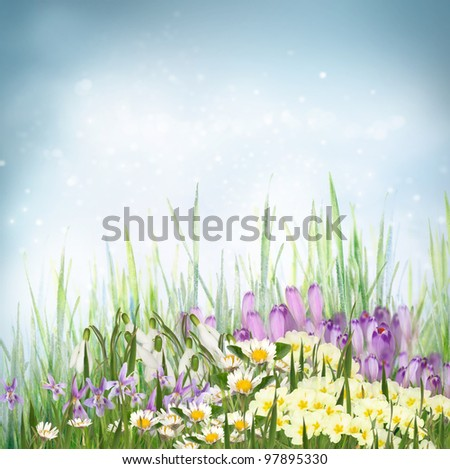 Winter or early spring nature background with grass and crocus flowers, primrose, snowdrop, violets and daisies. Spring floral background
