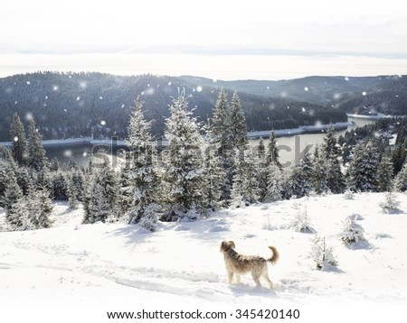 Winter panorama with dog by a mountain lake. Christmas Snowflakes - stock photo