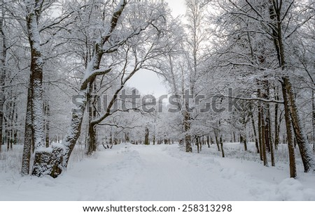 Winter park landscape with trees in frost and snow. - stock photo