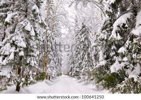 winter park, Pavlovsk, Saint-Petersburg, Russia - stock photo