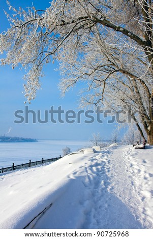 Winter  park, scenery with trees in sunny cold day
