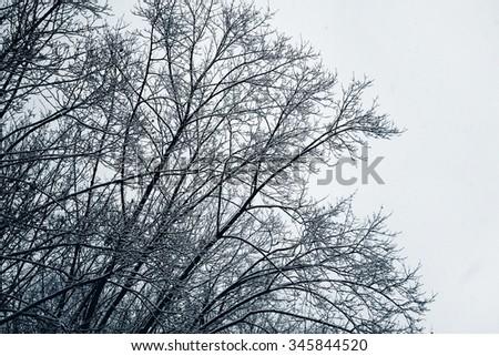 Winter park. Snow - stock photo