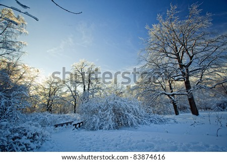 Winter park under snow at sunny day - stock photo