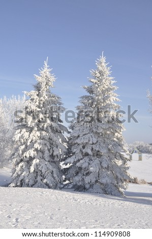 winter park with hoarfrost covered tree - stock photo