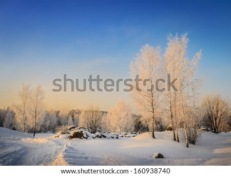 winter park with transparent birches in sunny morning - stock photo