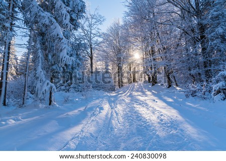 Winter path in forest with sun shining through trees, Beskid Sadecki Mountains, Poland - stock photo