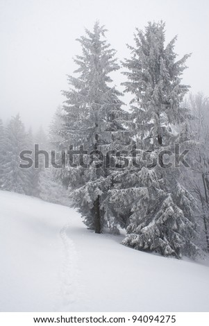 Winter path surrounded by trees in polish mountains. Winter landscape.