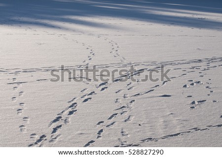 Winter patterns : footprints and blue shadows on snow.