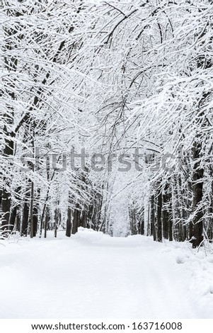 Winter road among frosted beech trees - stock photo