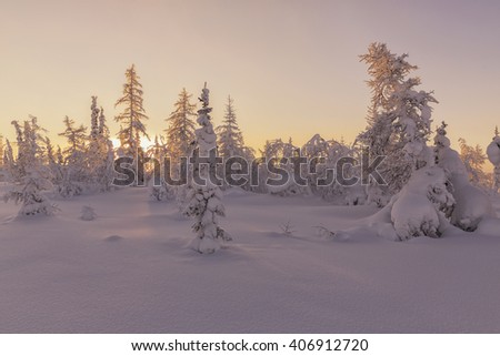 winter road. beautiful winter landscape. winter forest - stock photo