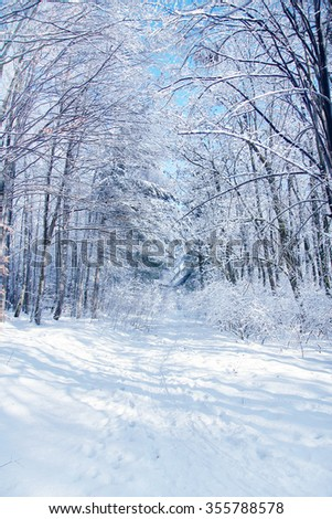winter road forest - stock photo
