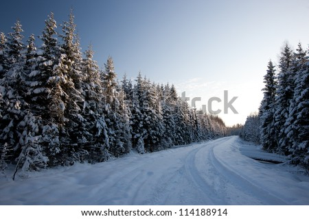 Winter road in country side with fir trees, Latvia, Baltic state, Europe - stock photo