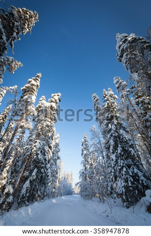 Winter road in Karelia, which goes through the pine forest - stock photo