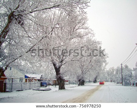 winter rustic landscape-trees after snowfall and snow-covered road