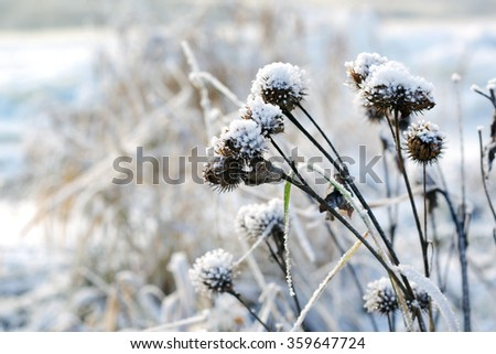 Winter scene and landscape, snowy fir, nature covered in snow. selective focus and narrow depth of field - stock photo