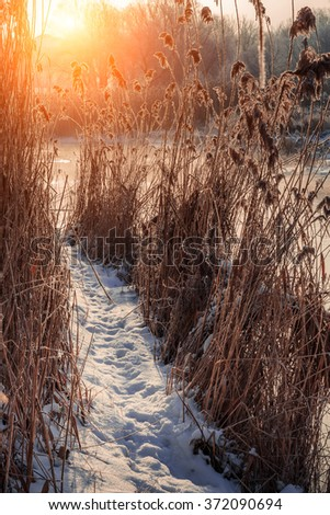 winter scene, beautiful view. trail through the thicket of reeds river at sunset. color in nature - stock photo