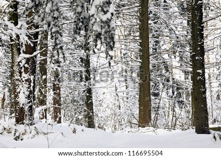 Winter scene in forest,