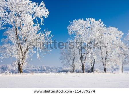 Winter scene in sunny day - stock photo
