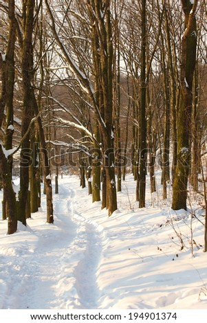 Winter scene patch in snow - forest - stock photo