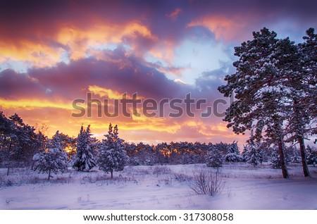 winter scene, snow forest at dawn, multicolored sky at sunrise - stock photo