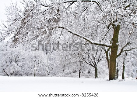 Winter scene trees covered with snow - stock photo