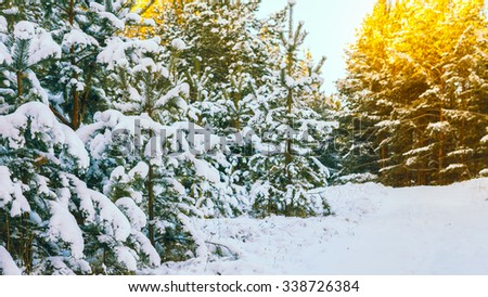 Winter scene with snow covered trees - stock photo